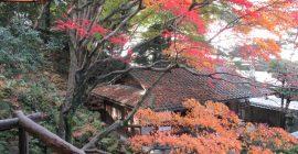 秋の月心寺で昼食し寂光寺の磨崖仏見学